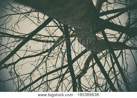 Tree in vintage tone with vignetting, nature