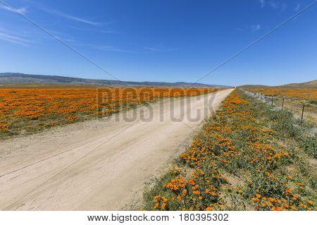 Dirt road in poppy wildflower fields near Lancaster, California.