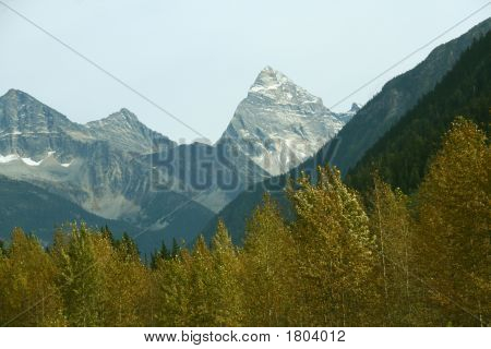 Mt Sir Donald yellow poplar forest clouds moving in Rogers Pass Yoho National park Canadian Rockies Revelstoke British Columbia Canada poster