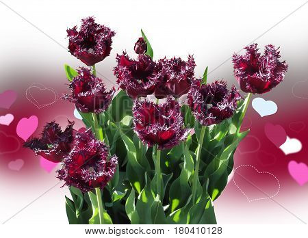 Festive card. Purple fringe of tulips and hearts. Attached a file in .png