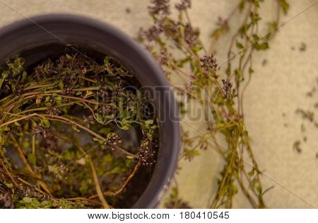 A cup of tea with fragrant thyme. Dried thyme