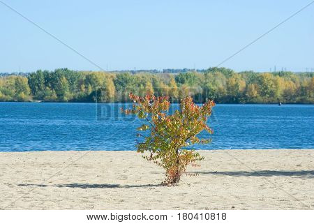 Sunny day on an autumnal beach of Dnepr river