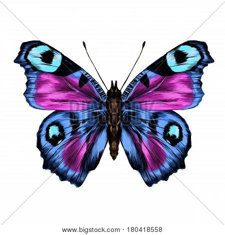 butterfly with open wings top view the symmetrical drawing graphics sketch vector color image wings violet and blue colors