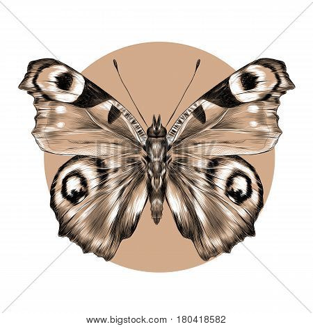 butterfly with open wings top view the symmetrical drawing graphics sketch vector black and white pattern on a brown background circle