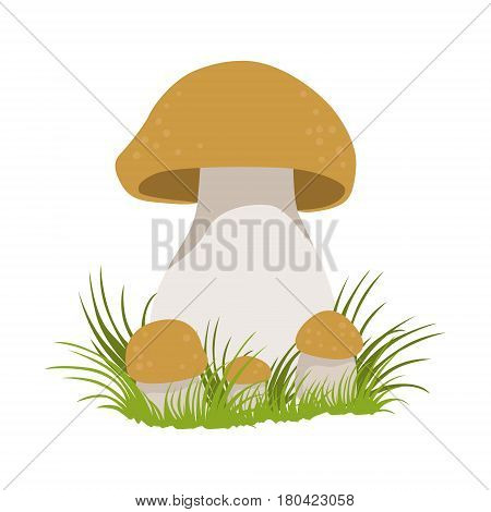 Porcini, edible forest mushrooms. Colorful cartoon illustration isolated on a white background