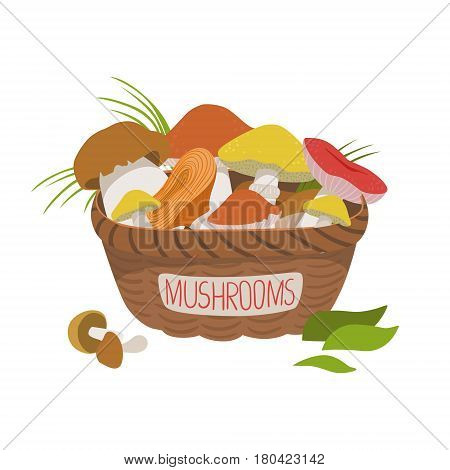 Busket full of wild mushrooms. Boletus and other types of edible mushrooms. Colorful cartoon illustration isolated on a white background