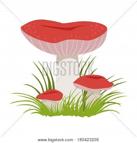 Russula xerampelina, edible forest mushrooms. Colorful cartoon illustration isolated on a white background