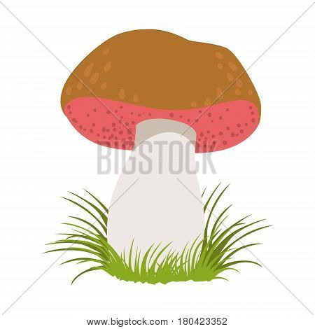 Tylopilus felleus, edible forest mushrooms. Colorful cartoon illustration isolated on a white background