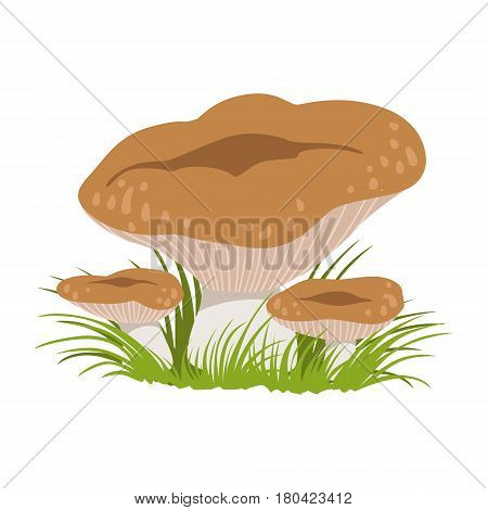 Rufous milkcap or lactarius rufus, edible forest mushrooms. Colorful cartoon illustration isolated on a white background