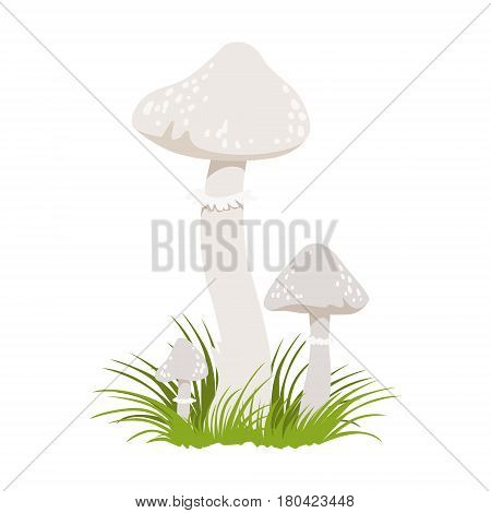 Amanita phalloides, poisonous mushrooms. Colorful cartoon illustration isolated on a white background