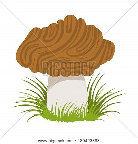 Morel, edible forest mushroom. Colorful cartoon illustration isolated on a white background