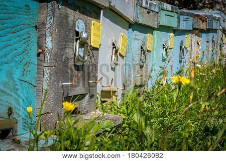 Colorful apiaries with working bees in a green field. Selective focus on the wooden beehives. Colorful beehives.