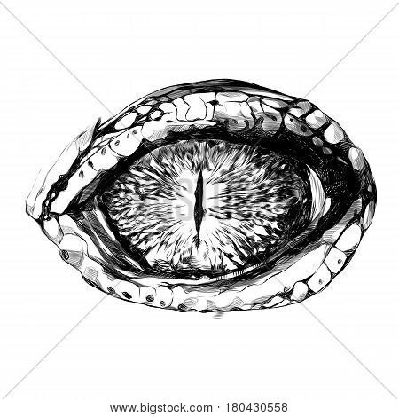 eye of a crocodile or reptile closeup sketch vector graphics black and white drawing