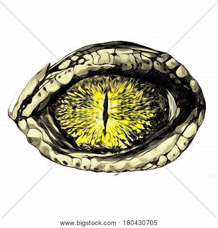 eye of a crocodile or reptile closeup sketch vector graphics color eye pattern yellow