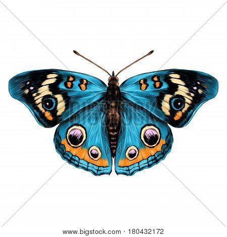 butterfly with open wings top view of symmetry sketch the graph of vector color drawing butterfly with blue wings