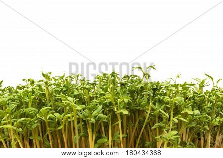 Watercress easter decoration Isolated on white background