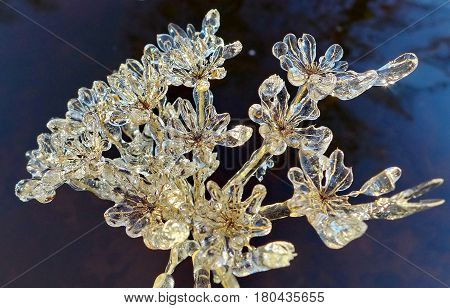 Ice flower against the dark sky. Snowflake from a flower. Wonders of nature. Beautiful snowflake. Subpolar Urals, Russia. Low DOF photography.