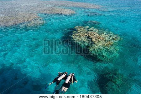 Divers in the coral sea with clear water looking into the water. Scuba diving activity