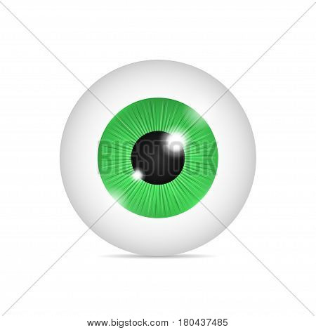 Realistic human eyeball. Green eye on white background