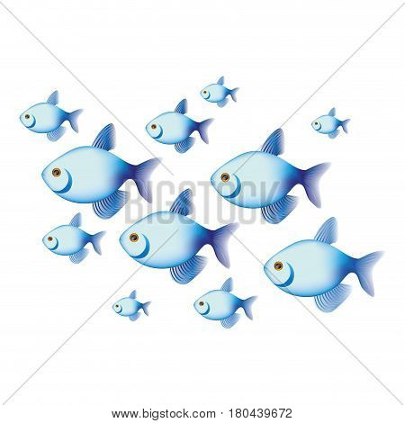 colorful set collection fish aquatic animal vector illustration