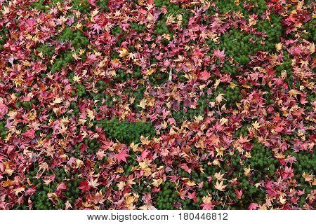 Japan Moss Garden
