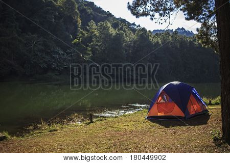 Tent Under The Pine Forest At Morning Against The Bright Sunlight