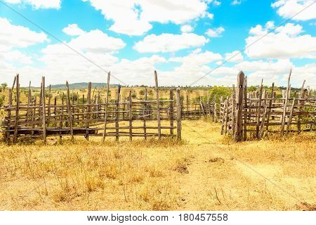 Farm Cattle Animals Corral In The Dry Blue Sky Cloudy Countryside Outbacks From Brazil. Rural - Sert