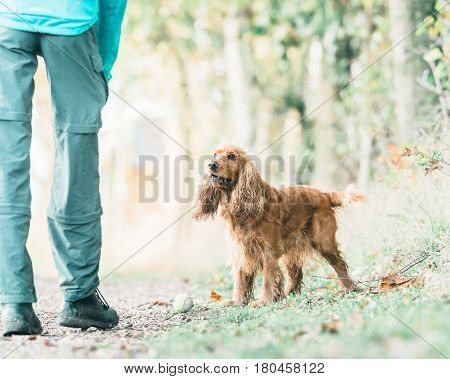 Cocker Spaniel And Owner With Tennis-ball On Rural Path.