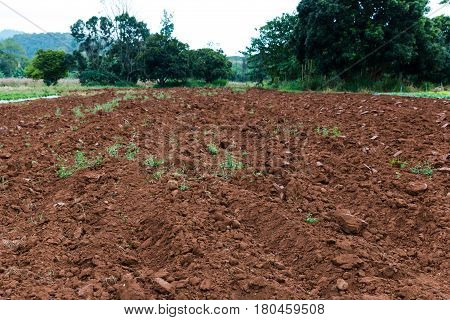 Tillage for cultivation. Agricultural farm row in a plowed field prepared of soil for planting crops. Outdoor at the daytime on summer day.