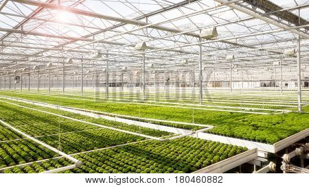 Large industrial greenhouse with rows of cultivation.