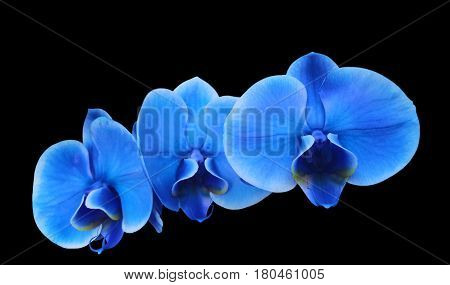 Photo illustration first floor Blue electric flower orchidee