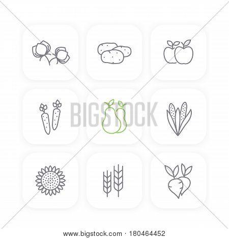 Harvest line icons set, potato, carrots, pears, apple, corn, sunflower, barley