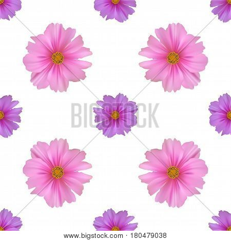 Seamless pattern with cosmos flower on white background.