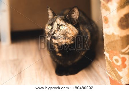 Black brown and tan cat with green eyes sitting in a corner.