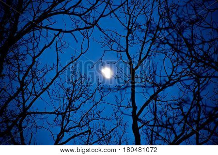 Incomplete Moon In The Night Sky Through The Branches Of Trees