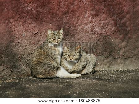 two funny stray cat lying in the sun at the house