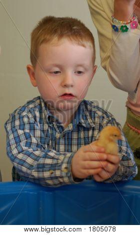 Chicken 101 1