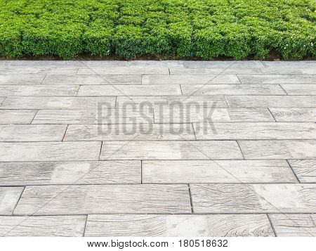 Wooden floor and green shrub, Texture of cement floor and green shrub