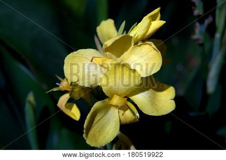 yellow flower plant beautiful lovely up close