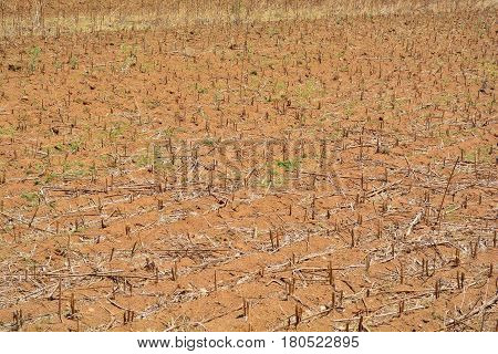 planting field that was left dry by lack of water