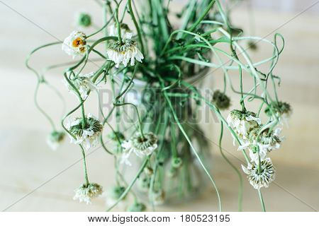 Side view of dry wild field chamomile flower bouquet in glass vase on a wooden backdrop to tea or alternative medicine concept