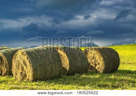 Autumn landscape with silage in the meadow with sky background