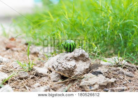 ball on stone in grass. Closeup of the ground with grass and stone