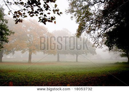 A peaceful trail into the mist surrounded by beautiful trees in autumnal colours