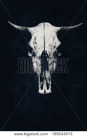 The menacing white bull skull on an abstract background