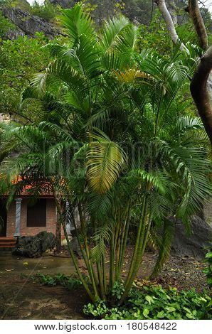Green Palm Tree In A Park