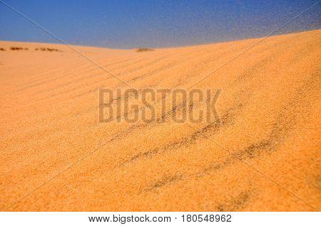 San Dunes In The Desert