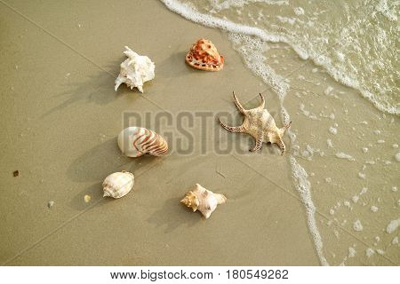 Six types of beautiful natural seashells scattered on the beach in Thailand