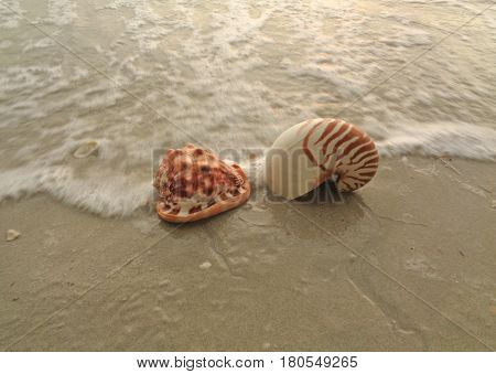 Natural Nautilus and King Helmet Conch Seashells on the beach crashing by the wave, Thailand
