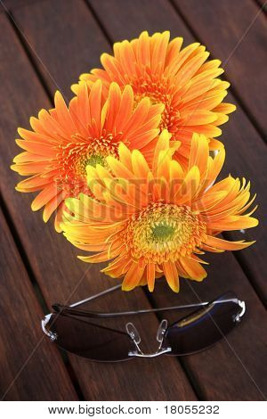 Beauty and protection. An arrangement of an orange gerbera (flower) and a pair of sunglasses